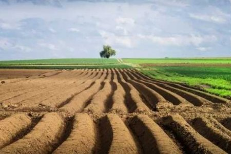 Кабмин утвердил проект Закона о рынке земли
