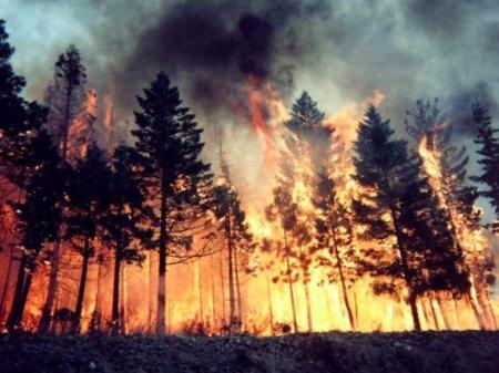 Систематическое хищение топлива - вот причина масштабных пожаров на Луганщине